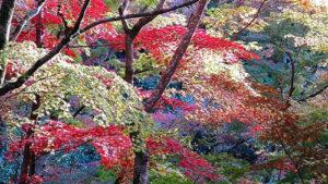 mindfulnessforliving_trees